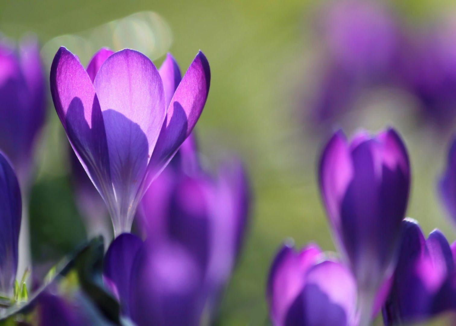 Achtergrond voorjaar